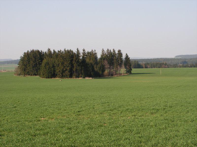 Suky, Česká republika