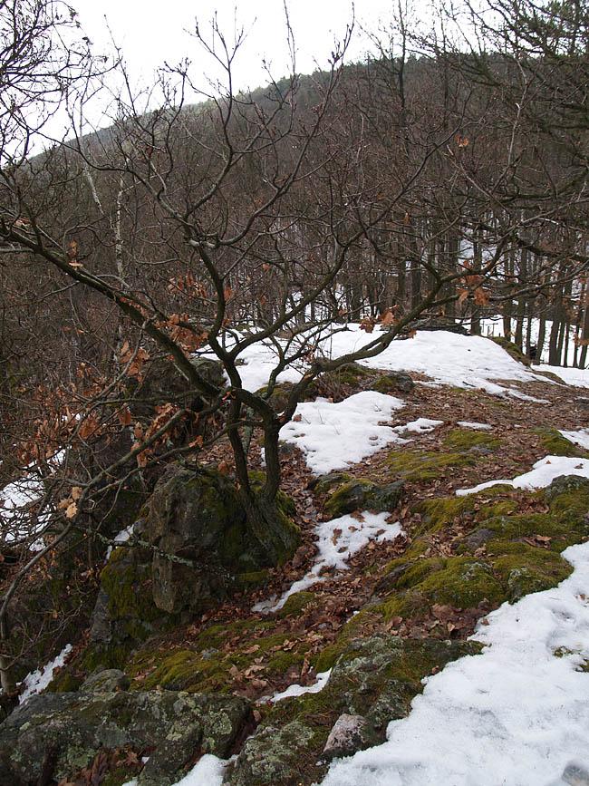 Tišnov, Květnice, Malá skála, Česká republika