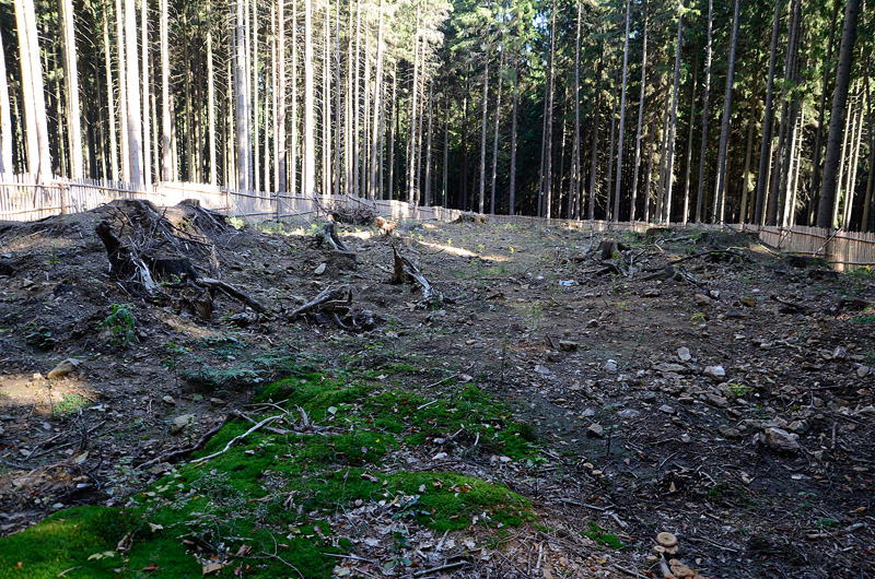 Vyskytná, Česká republika