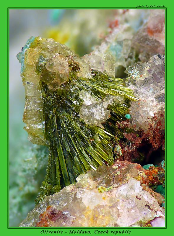 Olivenit